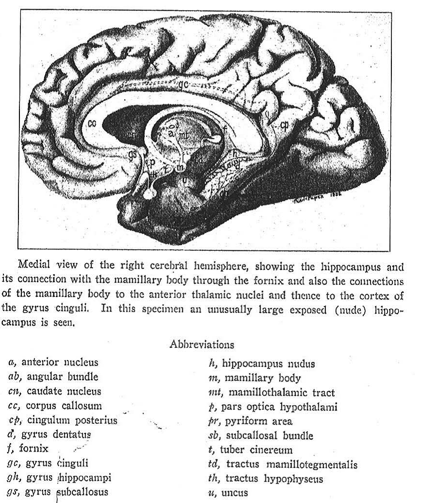 papez circuit | neuravinci